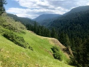 Roaring River Meadow (2)