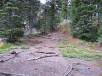 degraded-campsite
