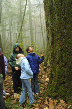 kids-looking-at-trees